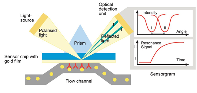 Surface Plasmon Resonance