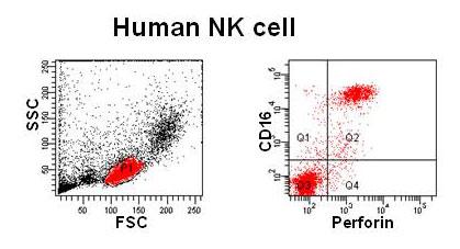 humannk-cell.jpg